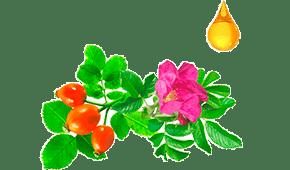Widi Care - Rosa Mosqueta